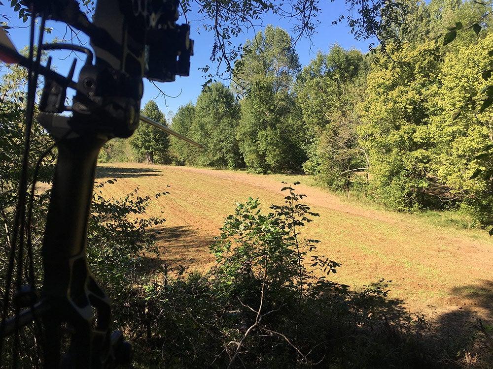 bow aiming into open plot area