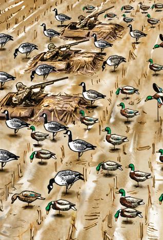 Waterfowl: 9 Tips for Hunting Mallards in Cut Corn Fields