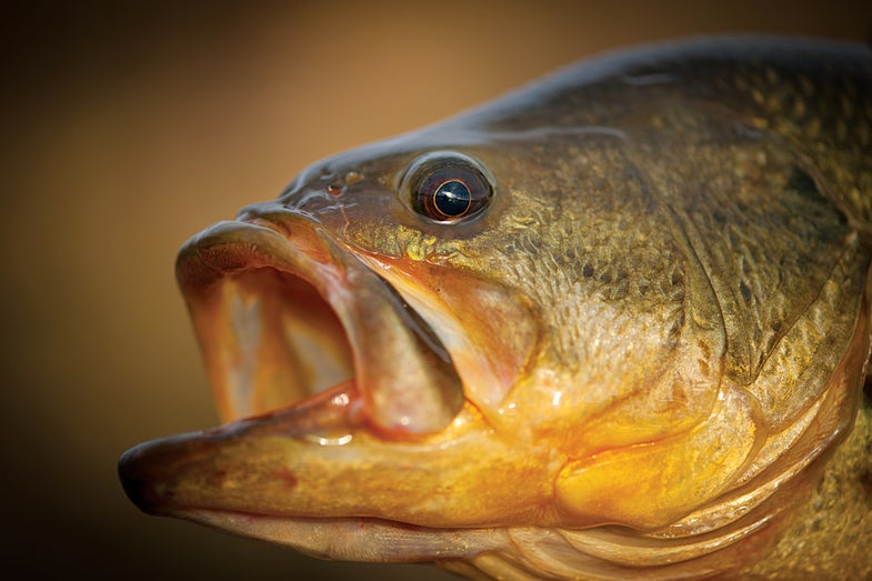 Why Bobbing for Spawning Bass Is Serious Business