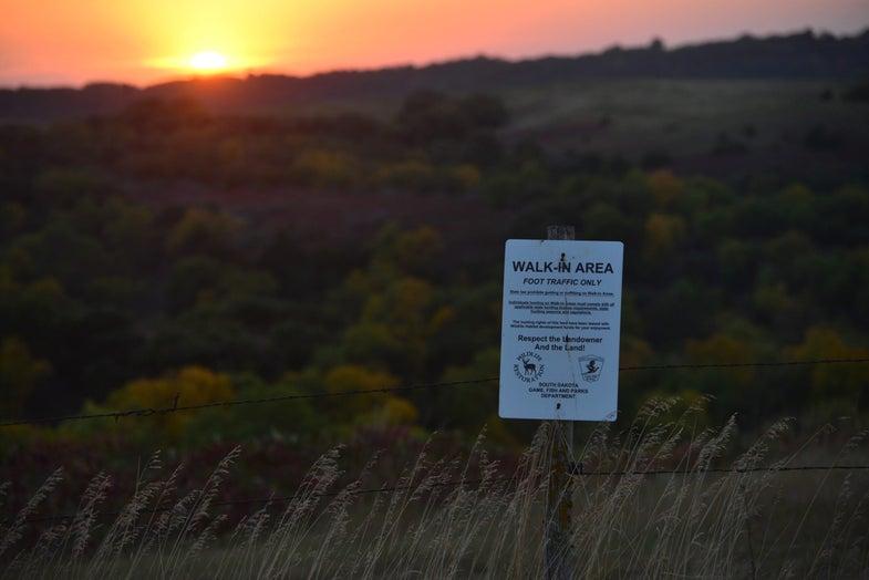 Hunting, Deer Hunting, Rut Report, Whitetails, South Dakota, Public Land, Dave Hurteau