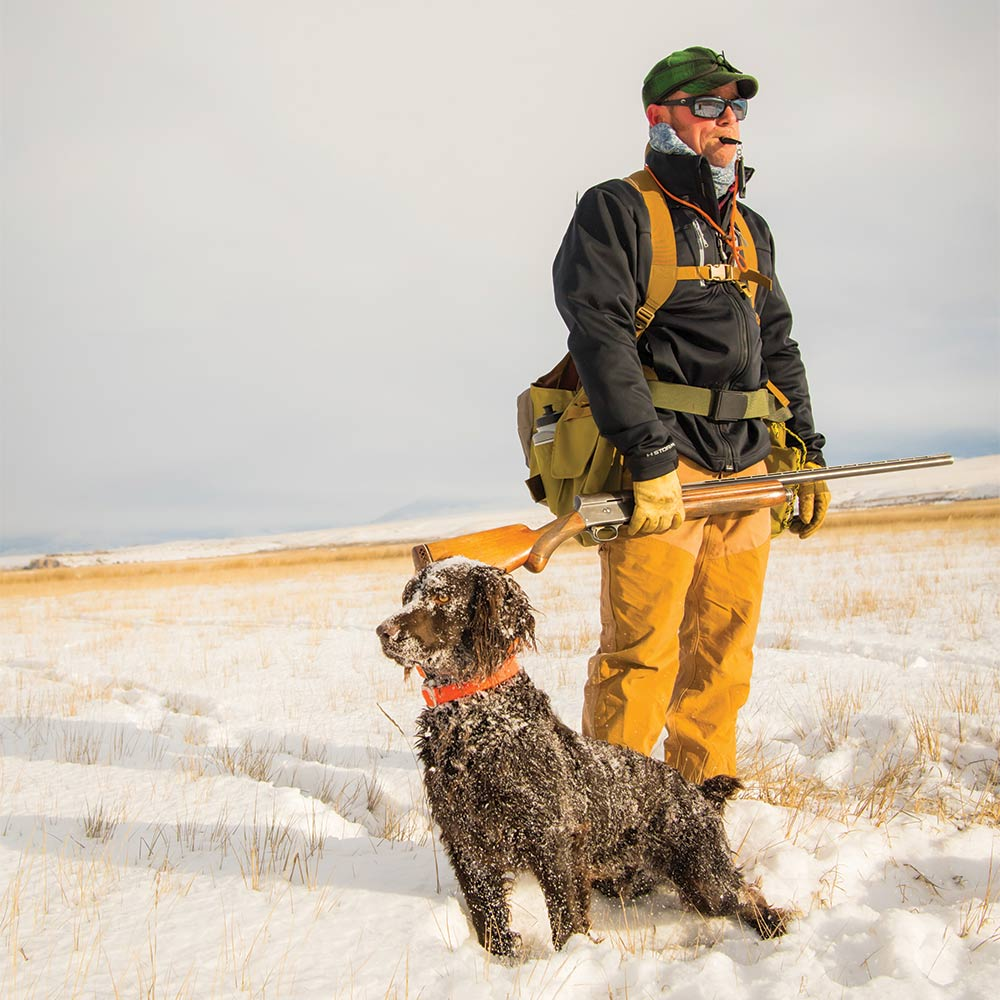 a hunter and a boykin spaniel standing in the snow