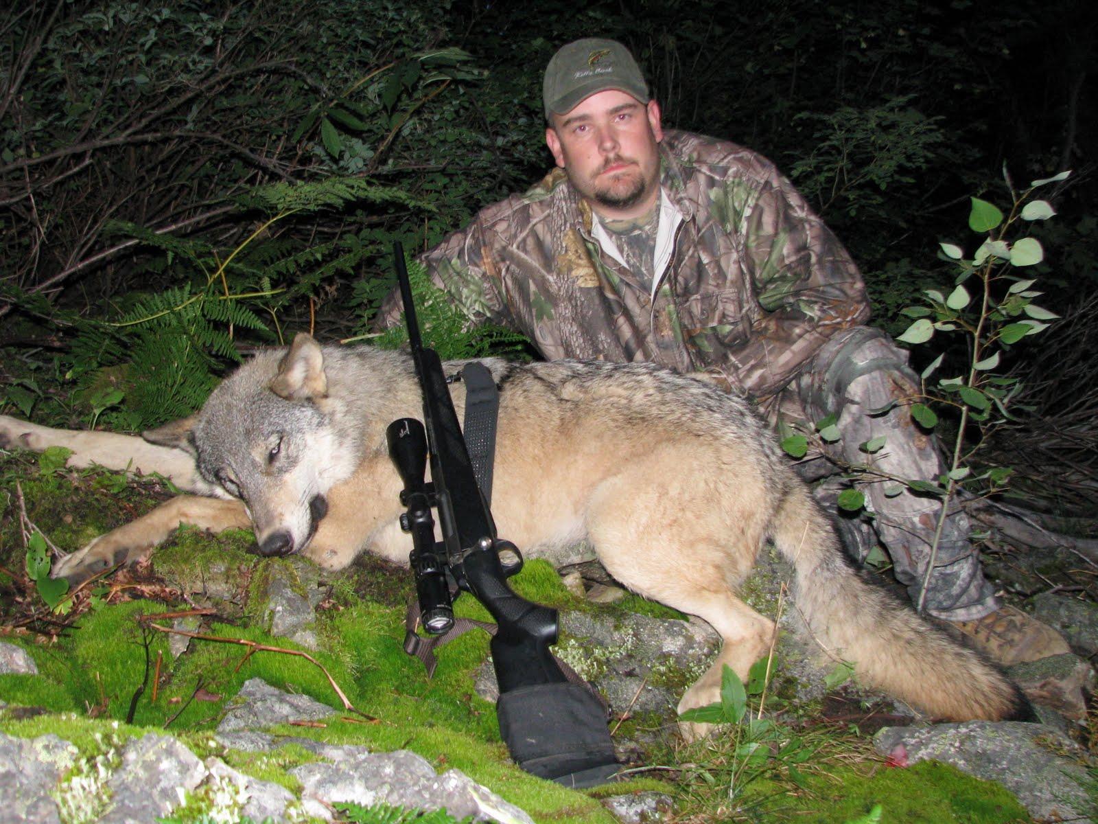 Regular F&S.com Poster Shoots Wolf In Idaho