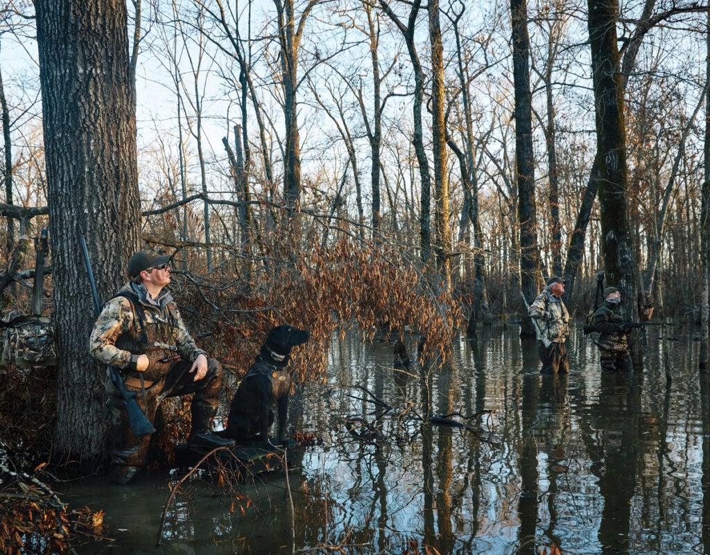 duck hunting arkansas