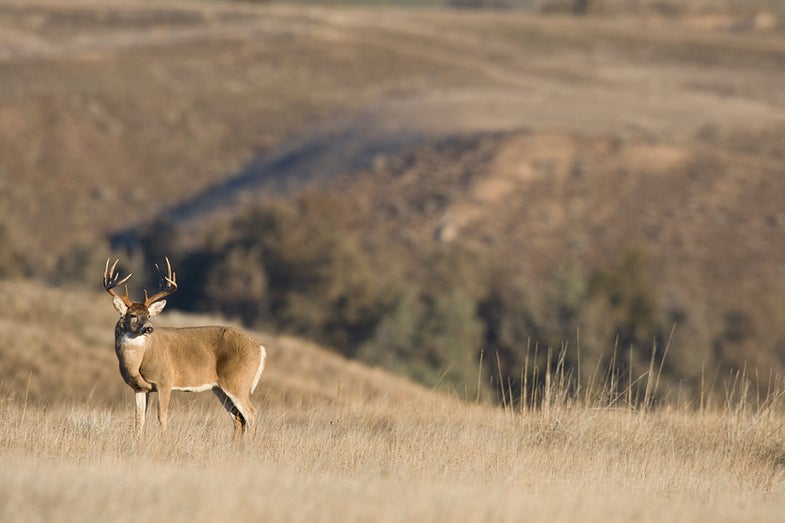 How to Place Your Deer Stand in Treeless, Open Terrain