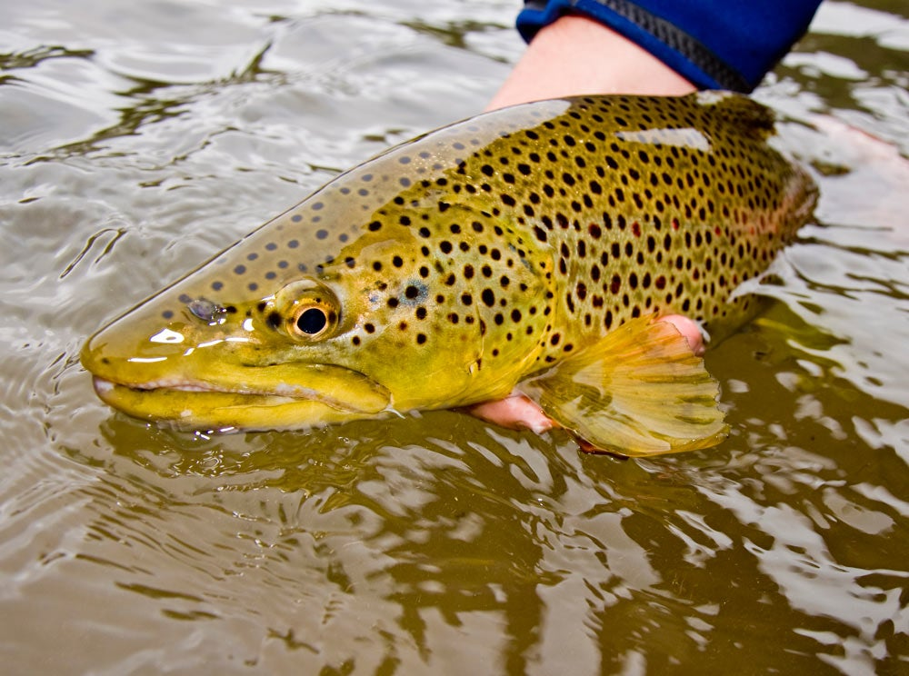 trout fishing cold swing
