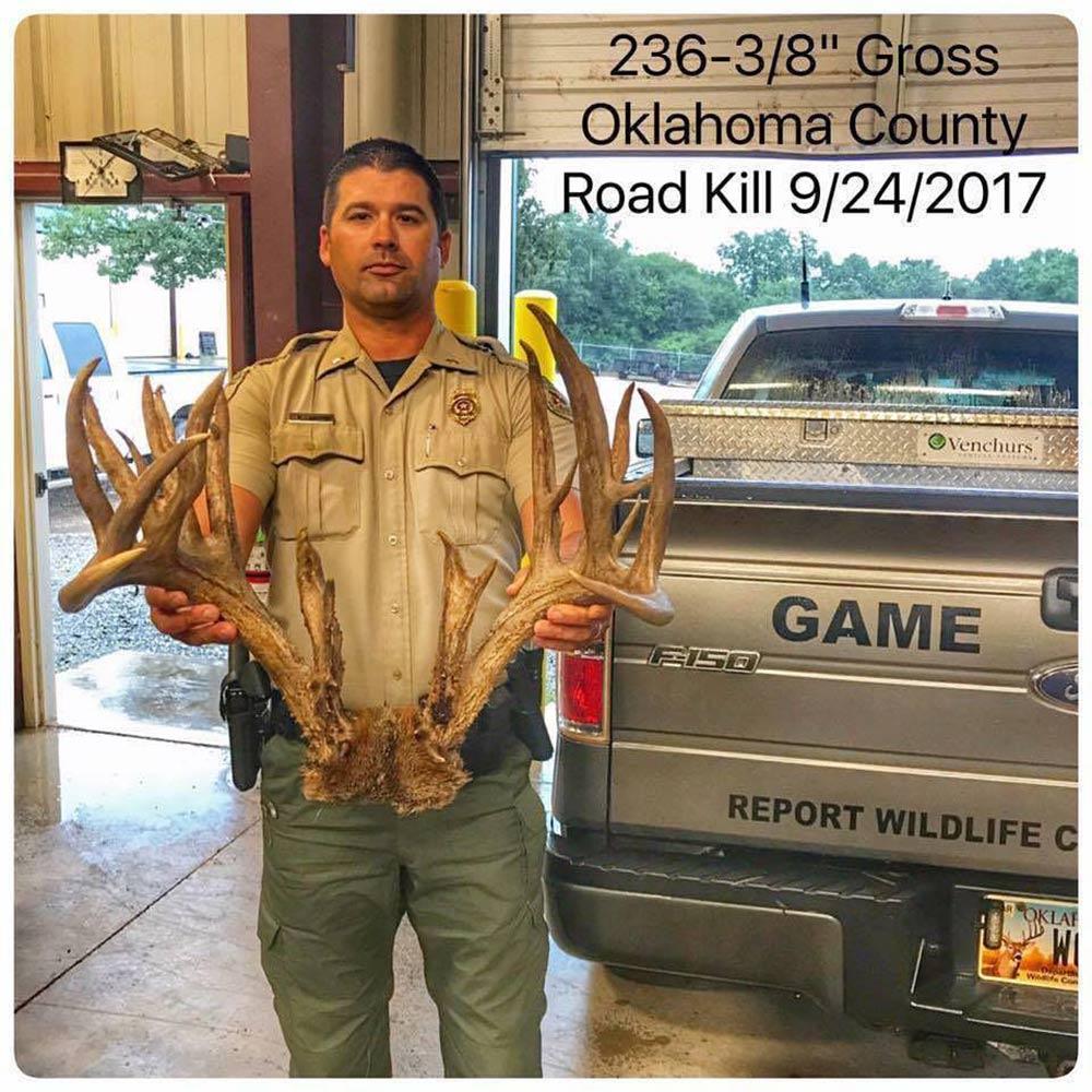 Best Bucks of September 2017 Oklahoma Roadkill