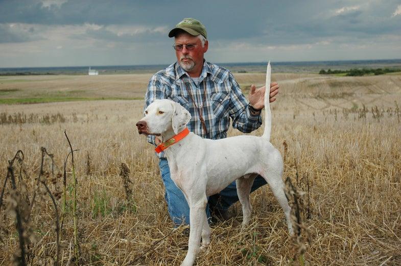 Gun Dog Training: Tips for Hiring a Pro