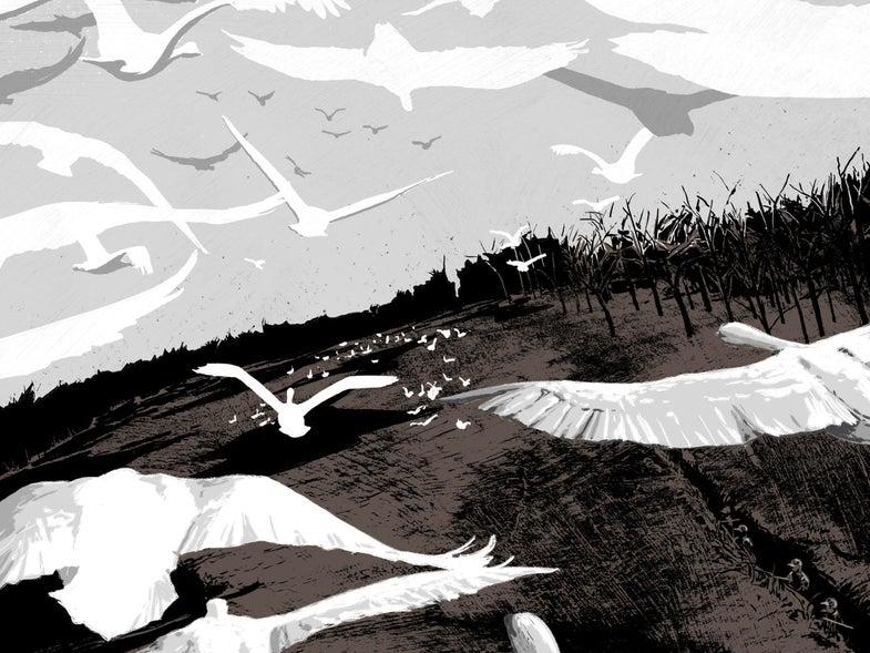 swan hunting spot