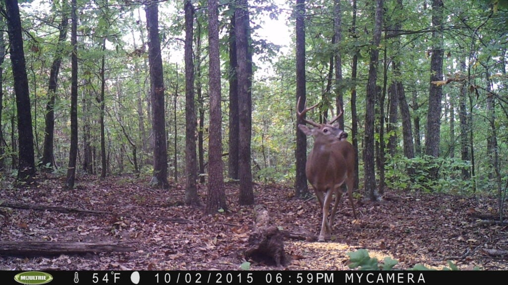Mid-South 8-Point