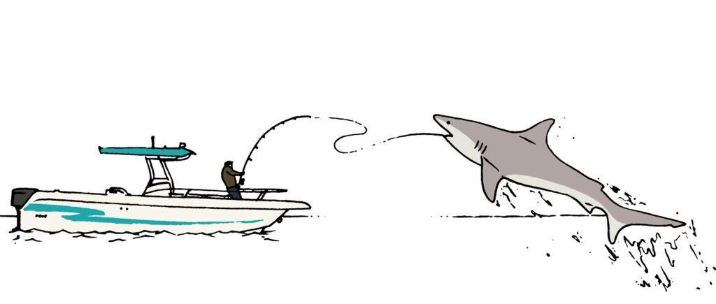 shark guide