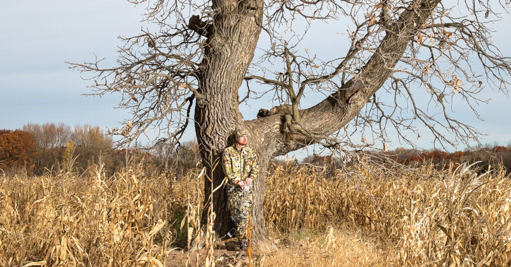 oak tree corn field bowhunting whitetail