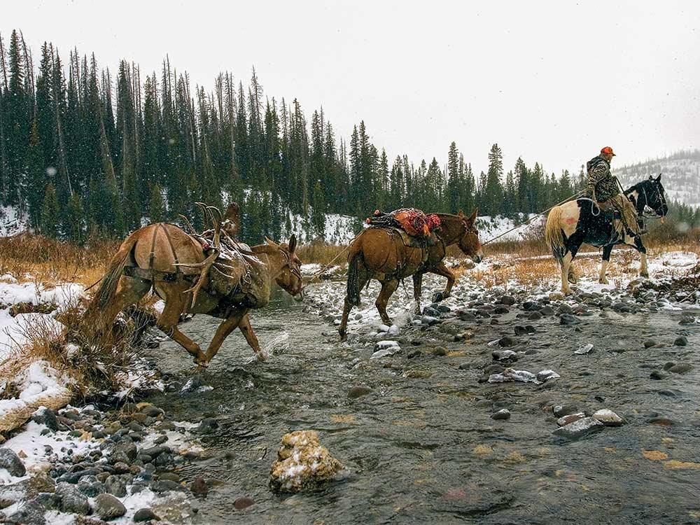 hunter on horse