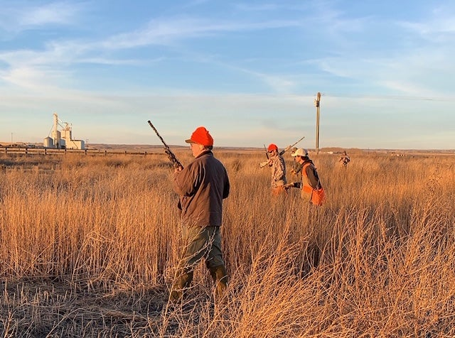 upland bird hunting in a field
