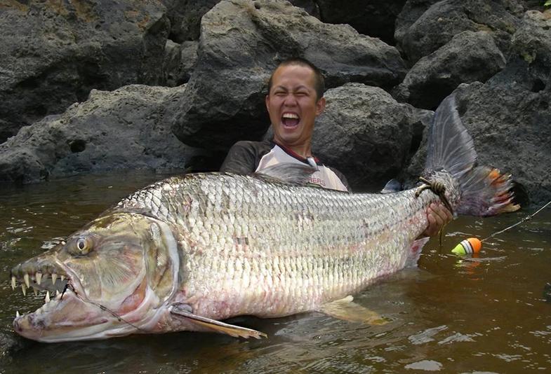 goliath-tigerfish