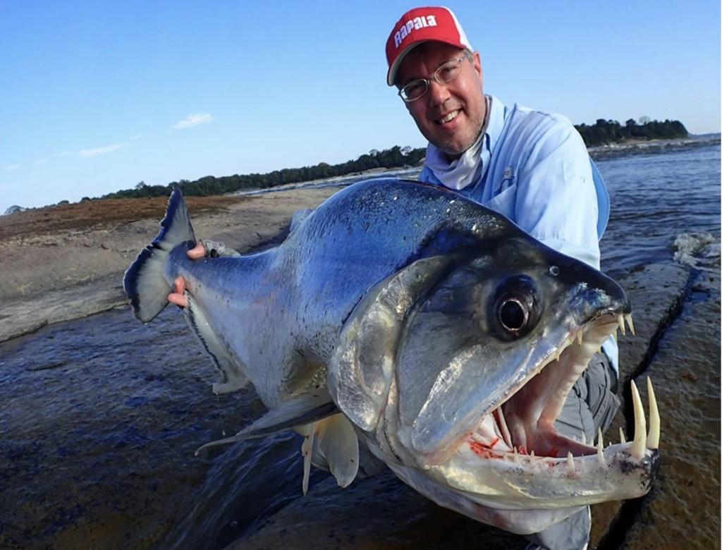 fisherman-catches-a-paraya-fish
