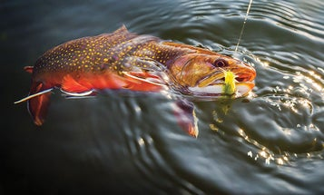 A Brook Trout Heaven in the Heart of Amish Country