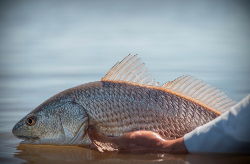 Photos: Texas Bass, Barbecue, and Redfish