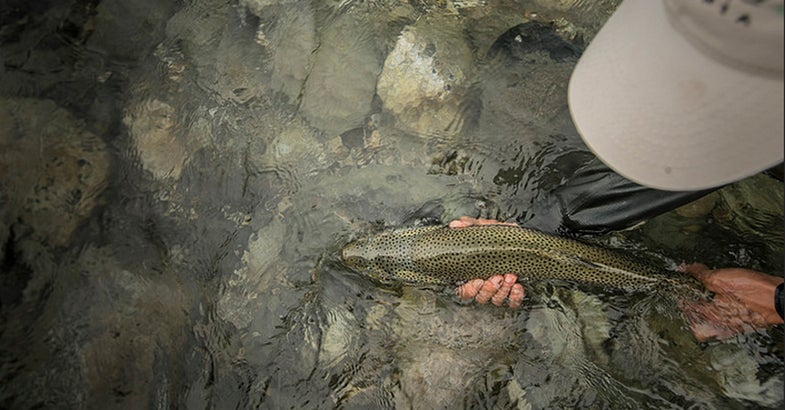 Photos: Big Trout in Patagonia, Part Three