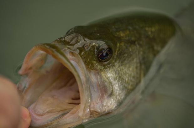 Slide Show: Texas Bass Rivers