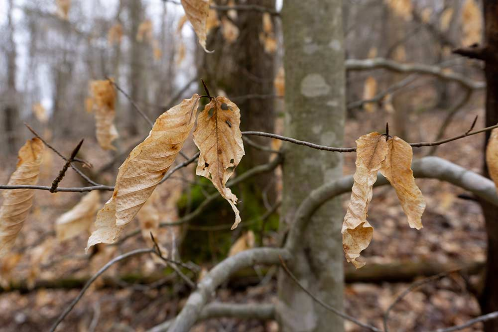 dry leaf hanging from a tree