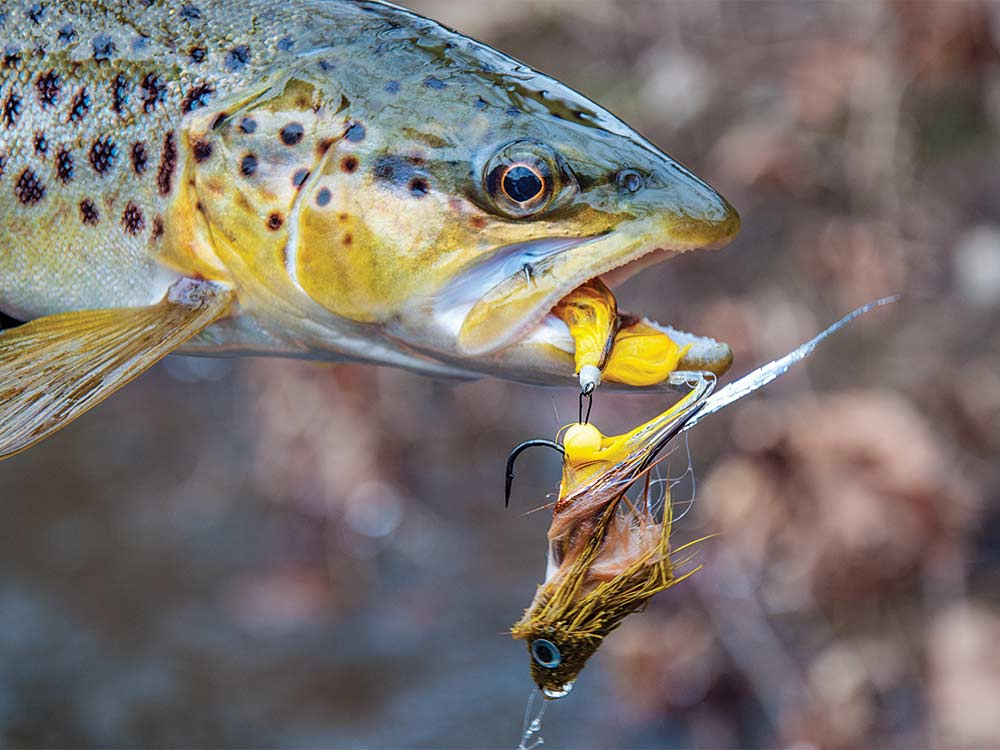 pennsylvania brown trout fly