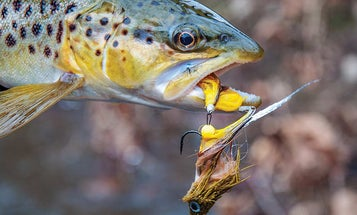 How to Tie and Fish one of the Best Streamers in Flyfishing