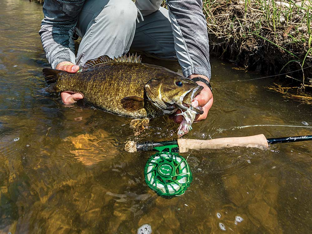 Smallmouth bass caught on a fly rod