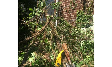 The Annual War on English Ivy