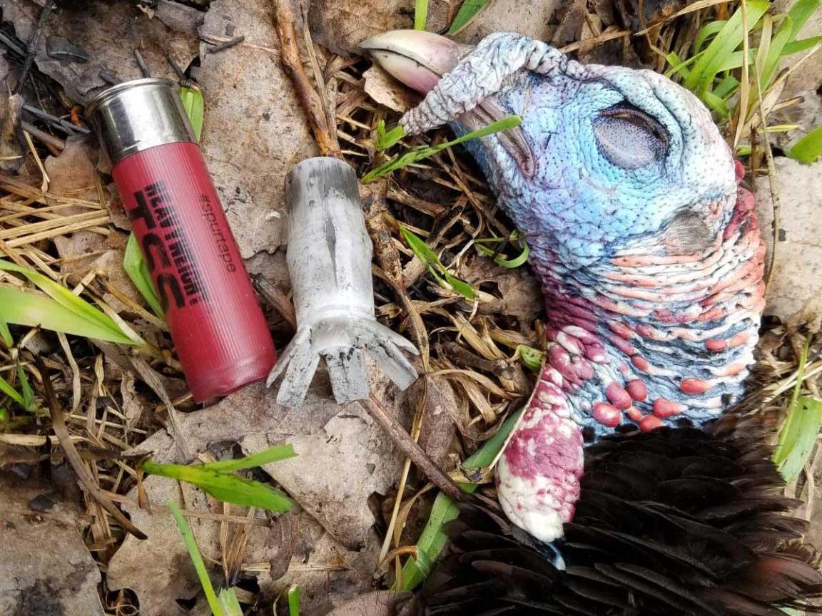 dead turkey next to federal tungsten super shot shell