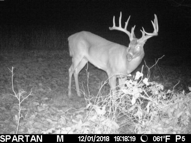 trail cam picture of buck