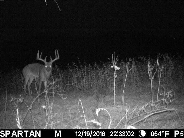 trail camera shot of nocturnal buck