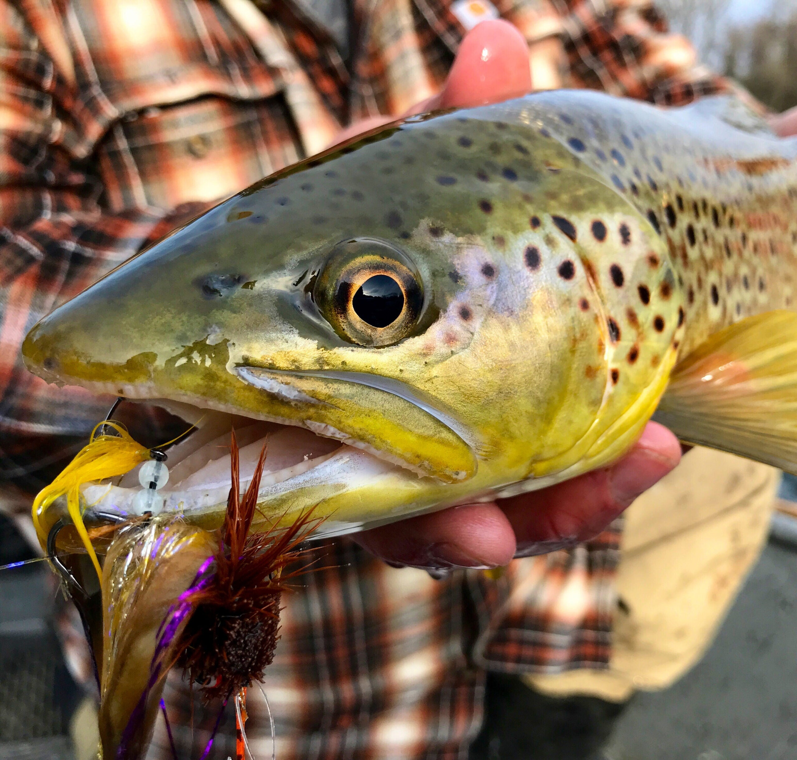 Hook Shots: Lowdown Lehigh River Browns