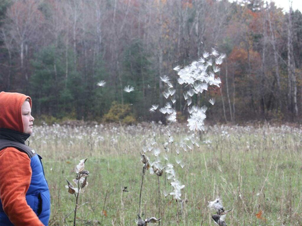 kid blowing milkwee stalk