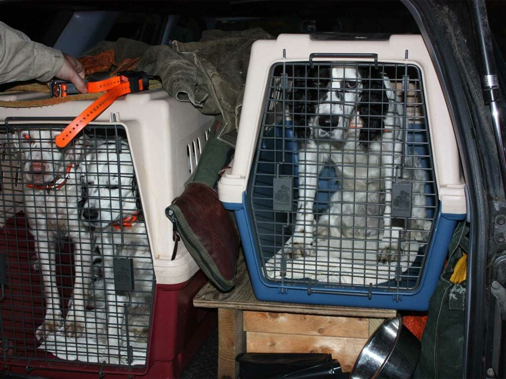 hunting dogs in plastic crates
