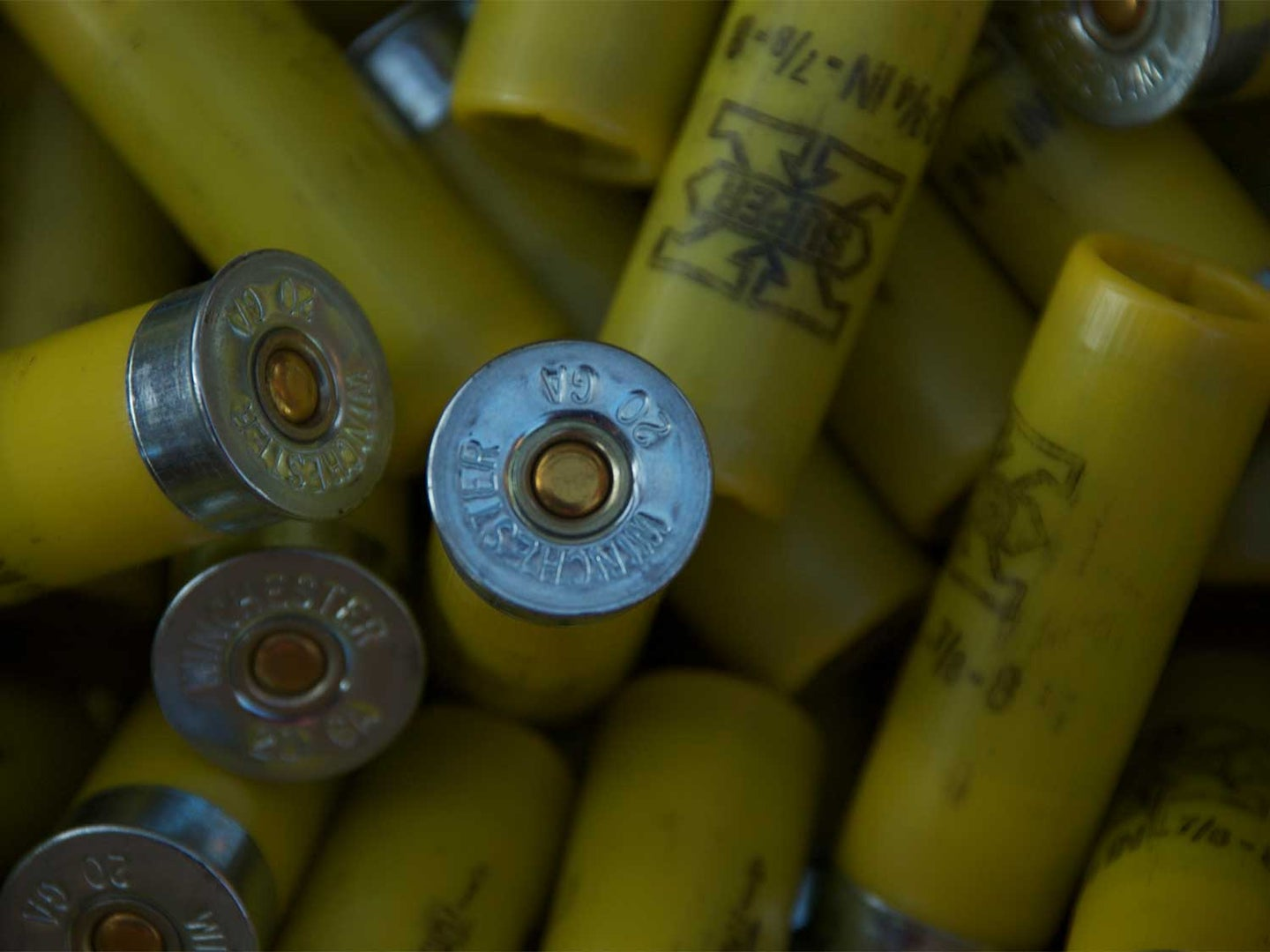 Does Reloading Actually Save Money?