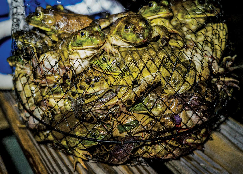 a fishing net basket full of frogs