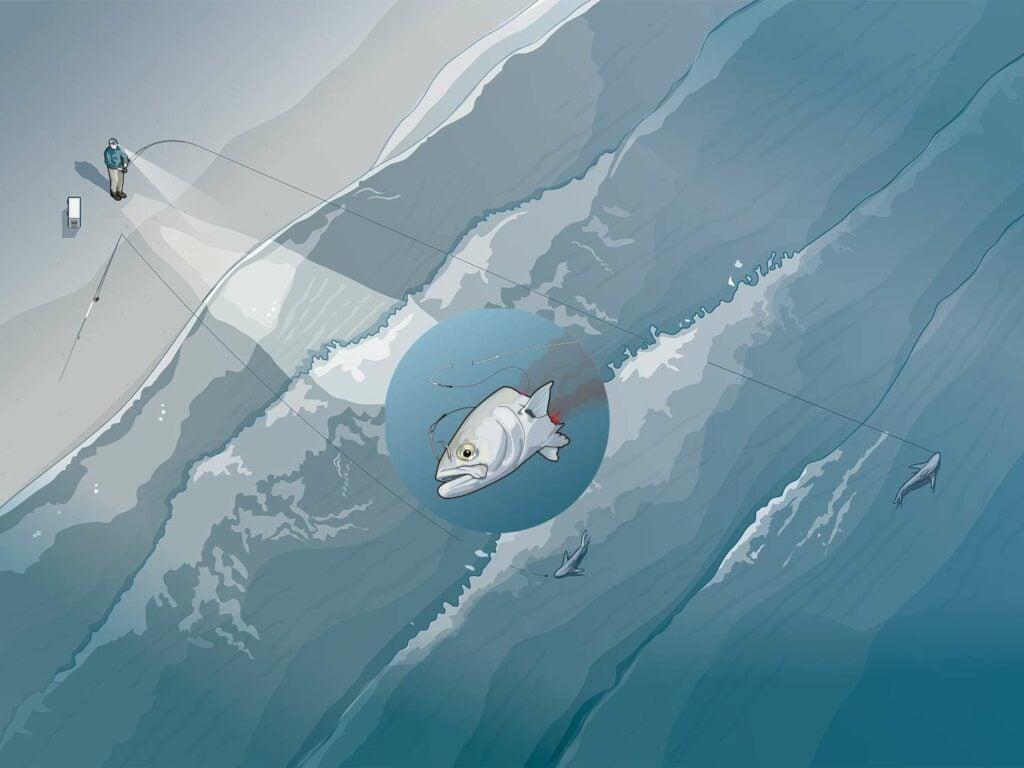illustration of shark bait on a surf shore line