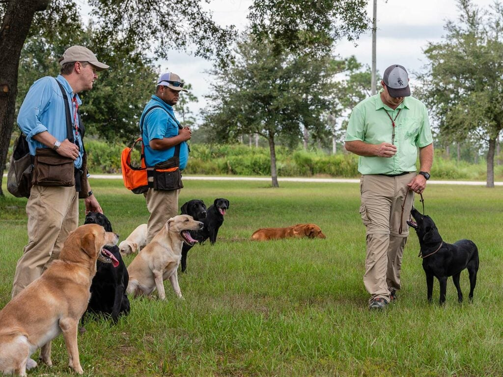 Blue Cypress Kennels team of three training hunting dogs