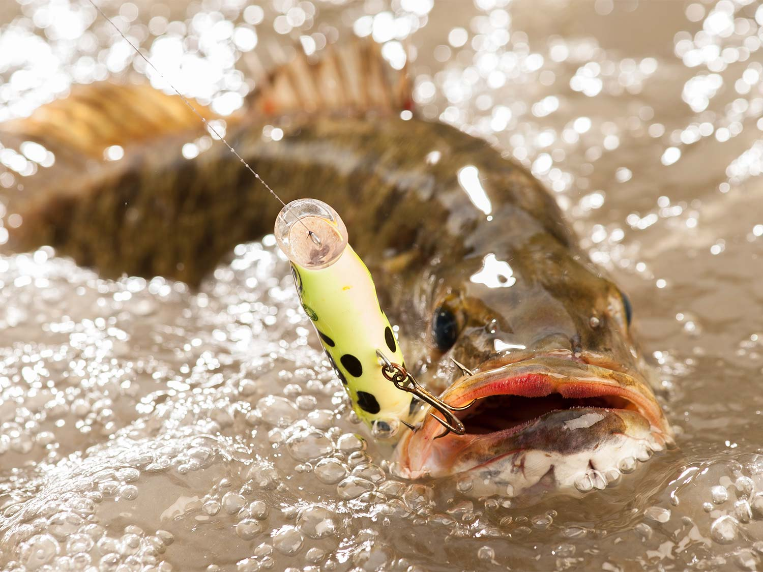 a smallmouth bass breaking the water