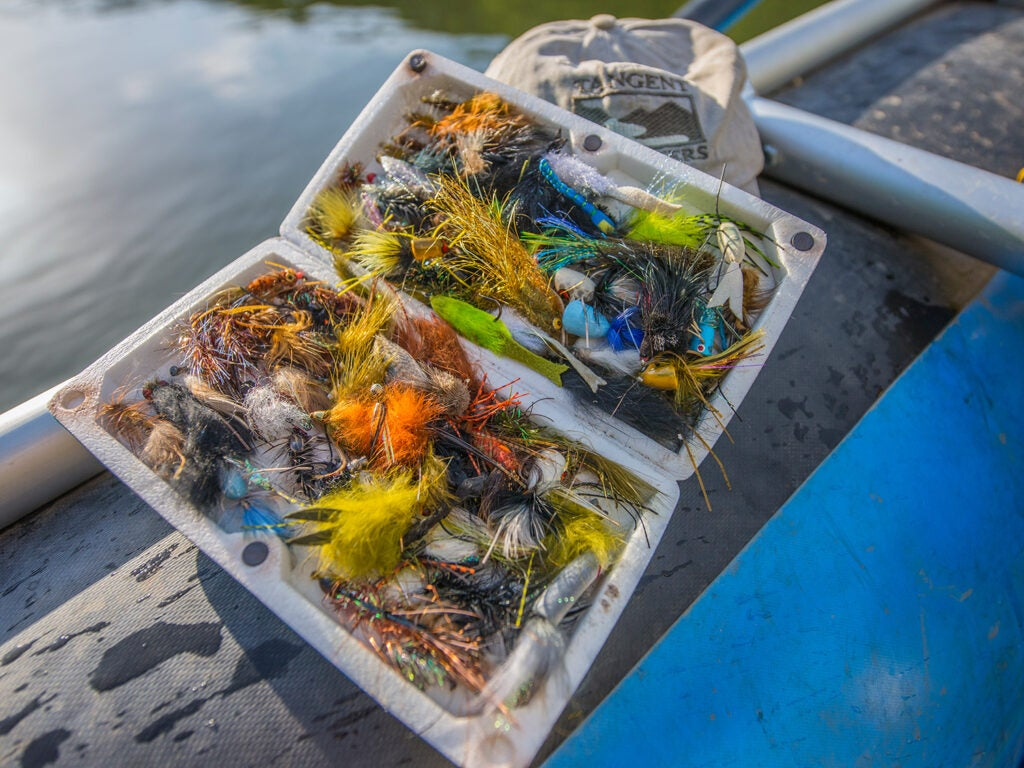 popper and streamer lures