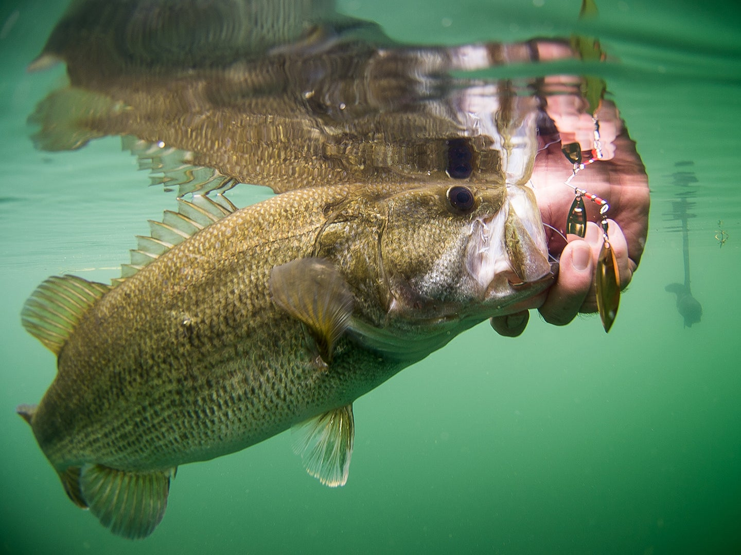 How To Pick the Best Spinnerbait Blade for Bass in Any Conditions
