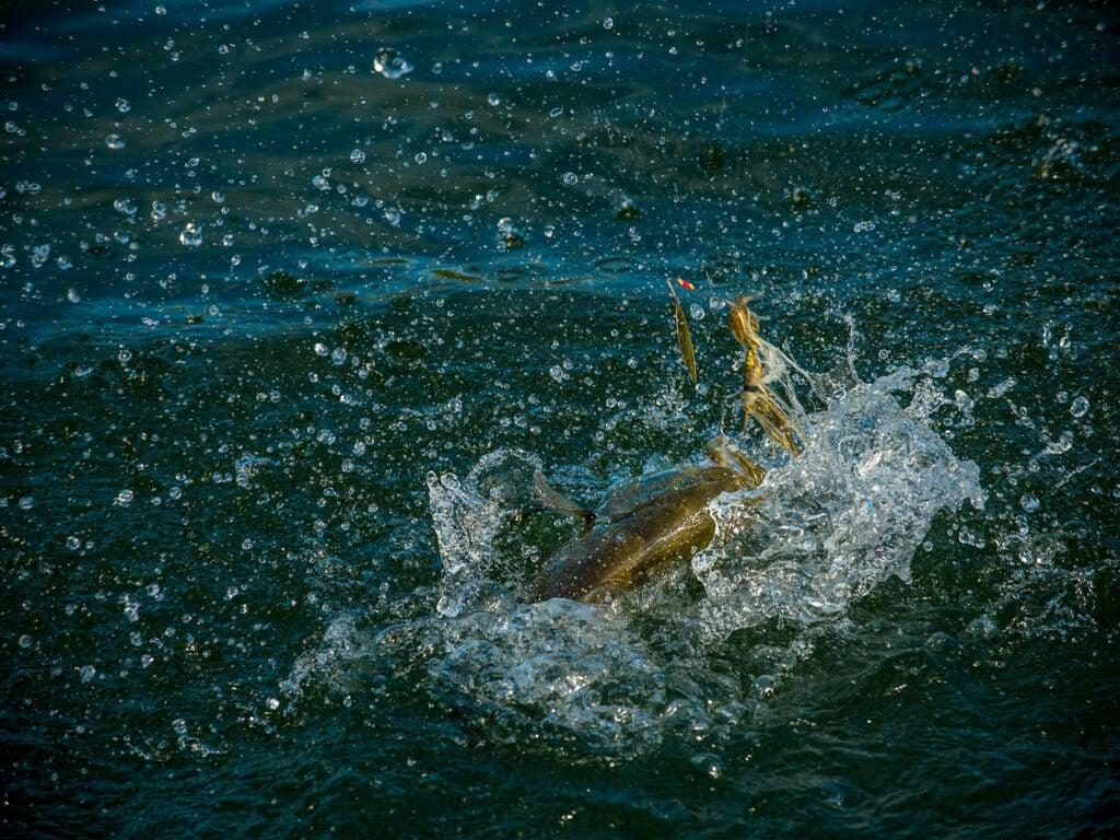 willowleaf blade bait