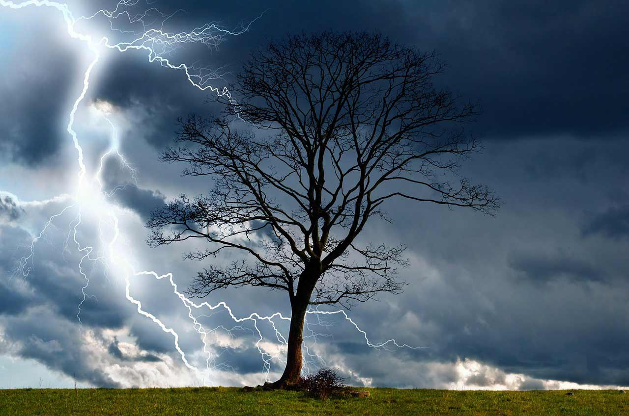 a tree on a field with a lightning storm in the background