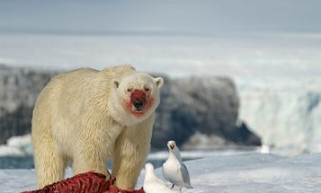 10 Most Powerful Animal Bites on the Planet