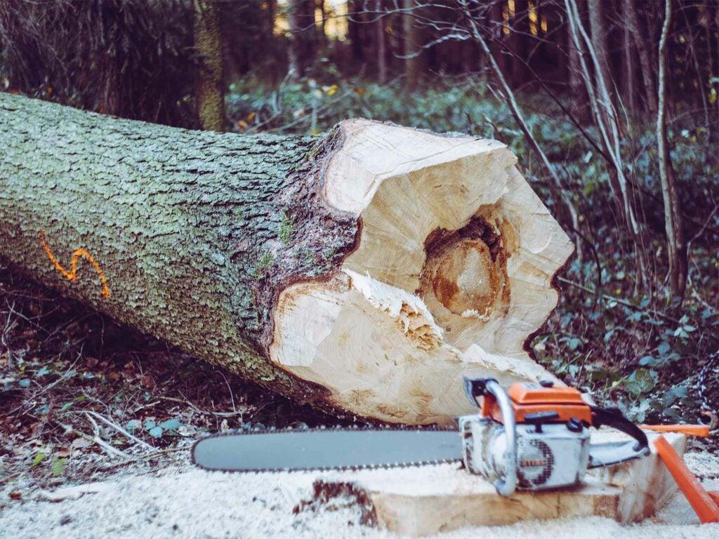 chainsaw near chopped down tree