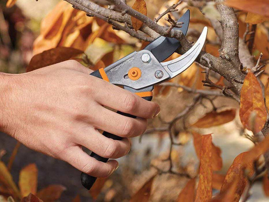 Three Things to Look For in the Best Pruning Shears