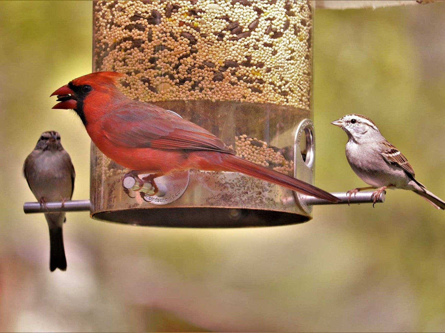 Three Things To Consider When Buying Bird Seed