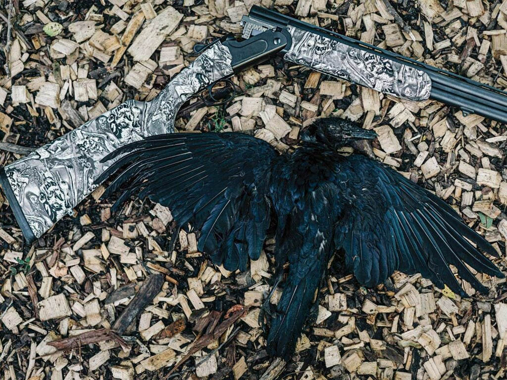 dead crow on the ground with a shotgun