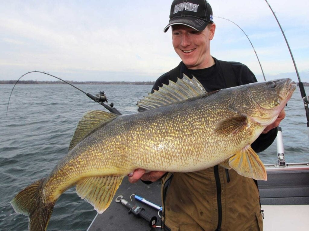 man holding up giant walleye fish
