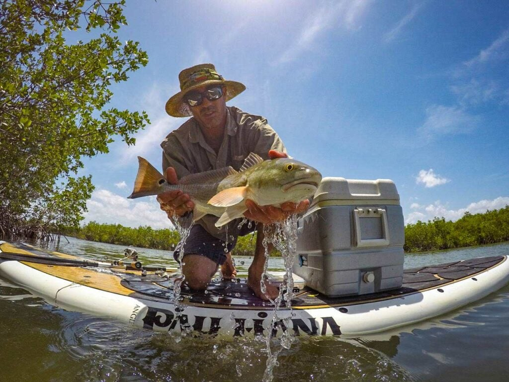 A SUP angler lifts a redfish out of the water for the camera.